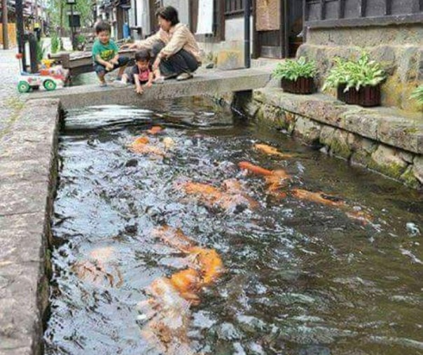 Tsuwano Kota Kecil di Jepang dengan Ribuan Ikan Koi